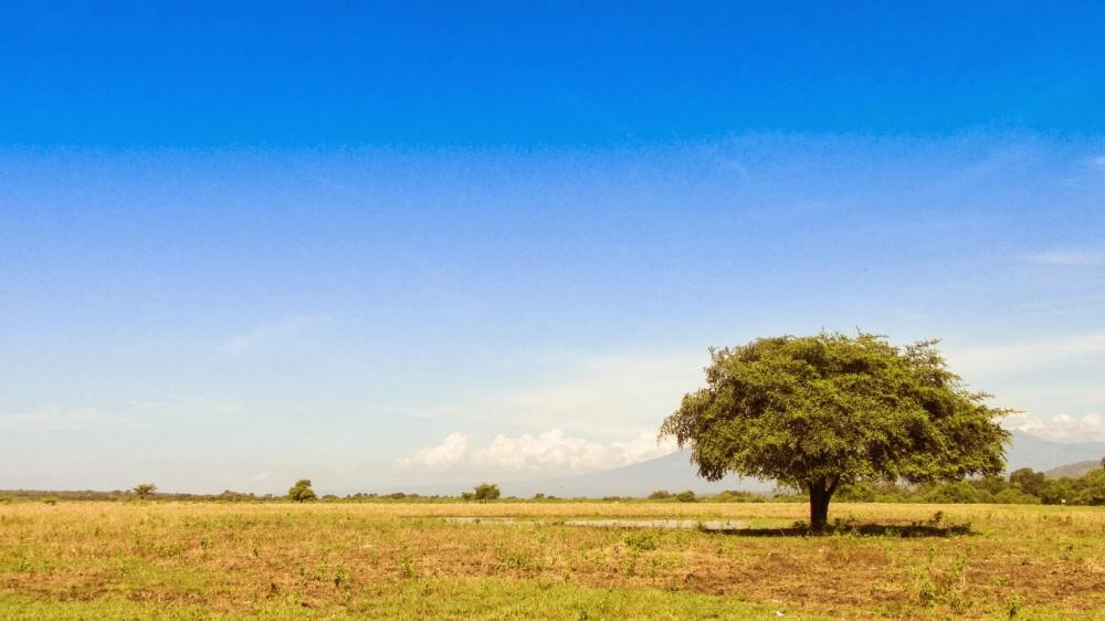 taman-nasional-baluran-jawa-timur